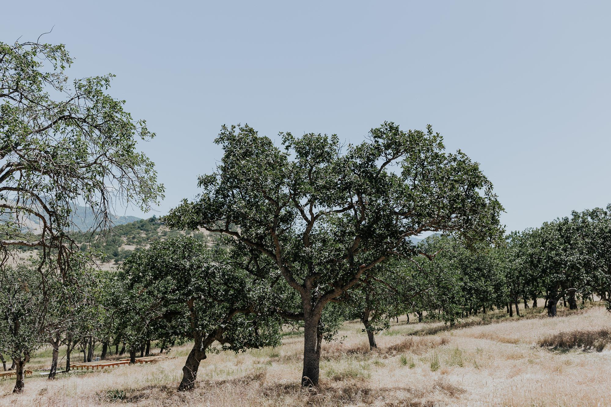 backyard wedding photographer oak tree outdoors